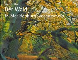 Der Wald in Mecklenburg-Vorpommern