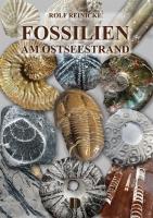 Fossilien vom Ostseestrand